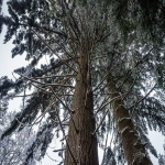 Tree Expert in Asthall Leigh 8