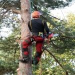 Tree Fellers in Aldermaston Soke 3