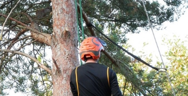 Tree Surgeon  in Aberthin